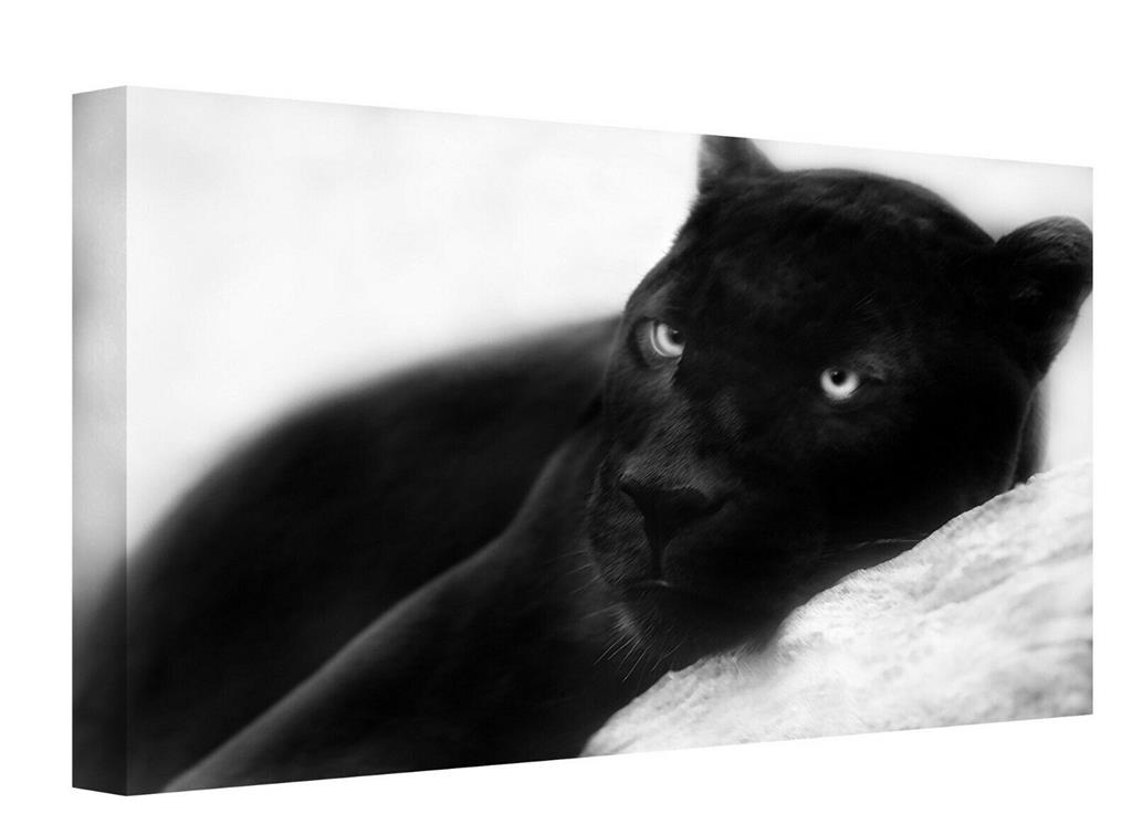 Canvas Wall Art Print Of A Black Panther Jaguar Picture Painting Reday To Hang Ebay
