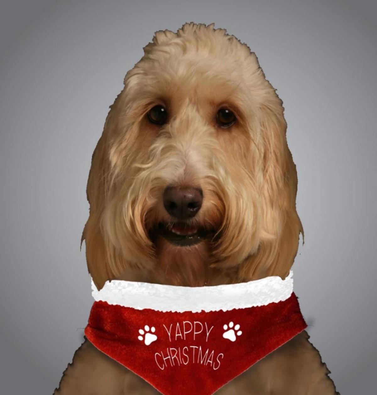 Hunde Halstuch Yappy Weihnachten Haustier Geschenk Santa Festlich ...