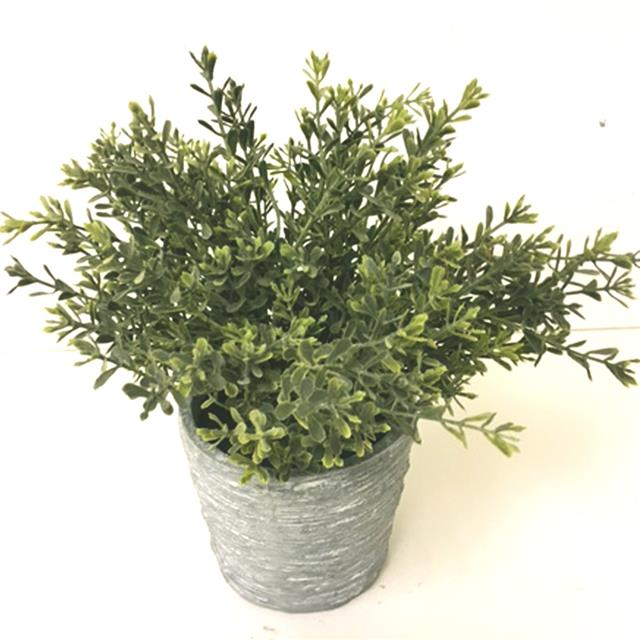Kitchen Herb Plants For Sale