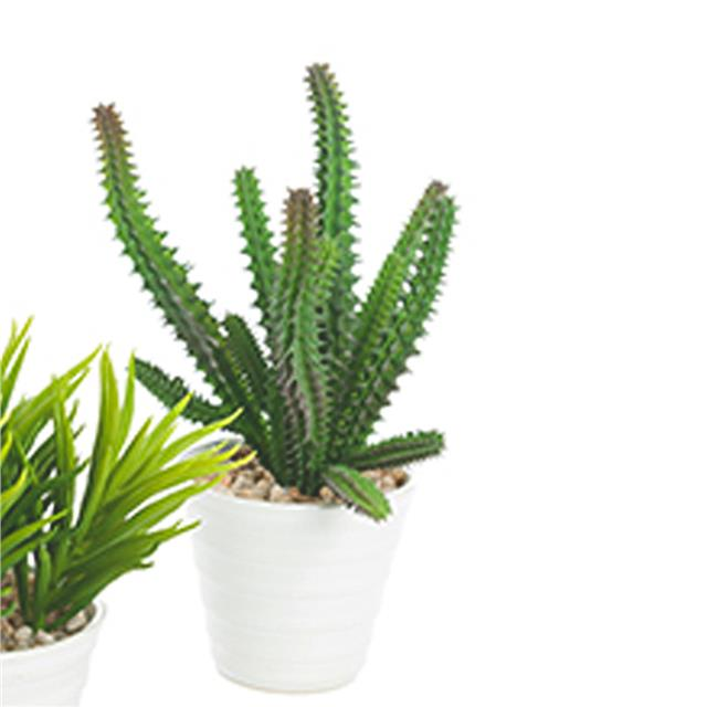 artificial potted succulent plants assorted green succulents
