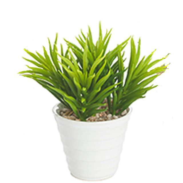 Artificial-Spiky-Succulent-Plant-in-a-White-Pot Variegated Spiky House Plant on spiky evergreen plant, spiky purple plant, spiky tropical plant, spiky succulent plant, spiky flower plant, spiky red plant, spiky fruit plant, spiky green plant, spiky brown plant,