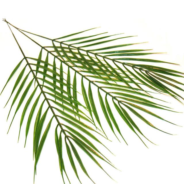 Artificial Palm Leaves Choose Qty Wedding Crafts Palm Sunday Leaf Tropical Ebay Free vectors for your nature, plants, palm trees, evergreen plants, exotic flora and tropical places visuals. details about artificial palm leaves choose qty wedding crafts palm sunday leaf tropical