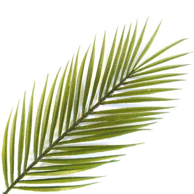Pack Of 3 Artificial 73cm Kentia Palm Leaf Decorative