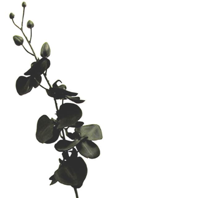 Artificial Silk Moth Orchid Single Stem 92cm Black Orchid Flowers