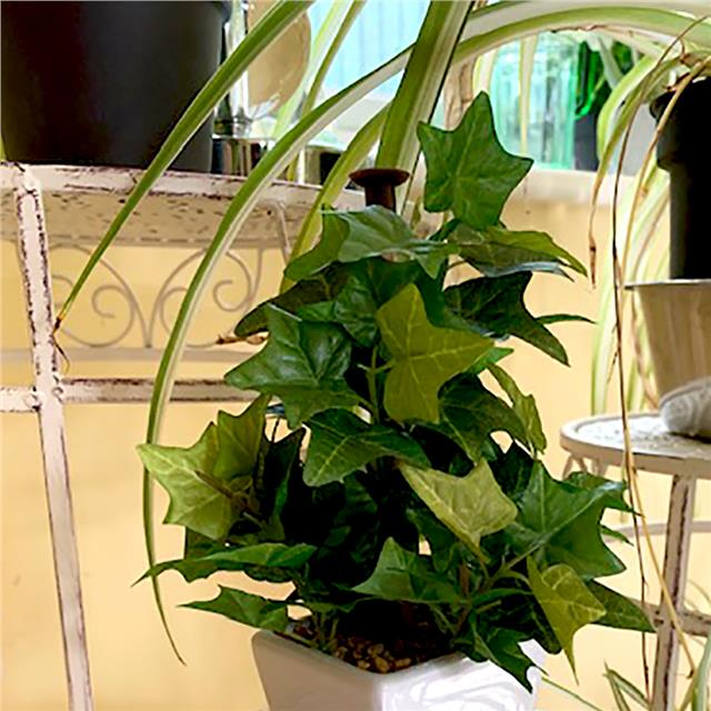 Artificial-Green-Ivy-Plant-in-a-White-Pot Variegated Potted Plant House on potted plant succulent, potted plant blue, potted plant beautiful, potted plant small, potted plant color, potted plant flower, potted plant long,