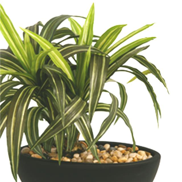 Artificial Dracena Plant White Green Decorative