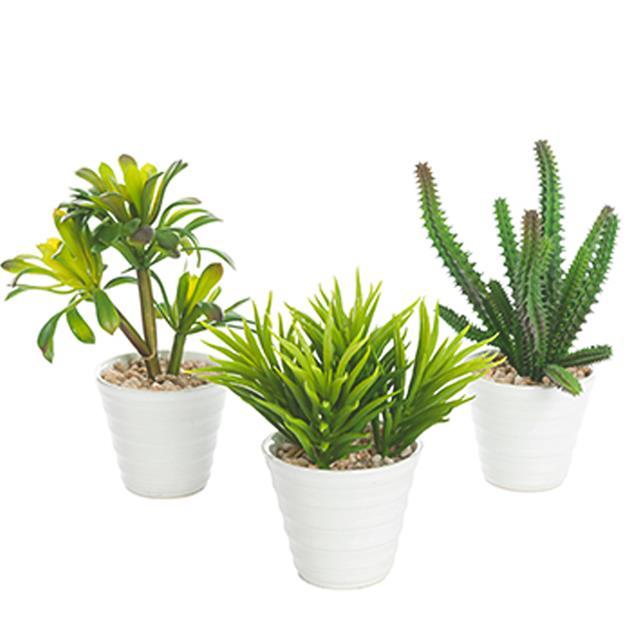 artificial potted succulent plants assorted green succulents choose type ebay. Black Bedroom Furniture Sets. Home Design Ideas